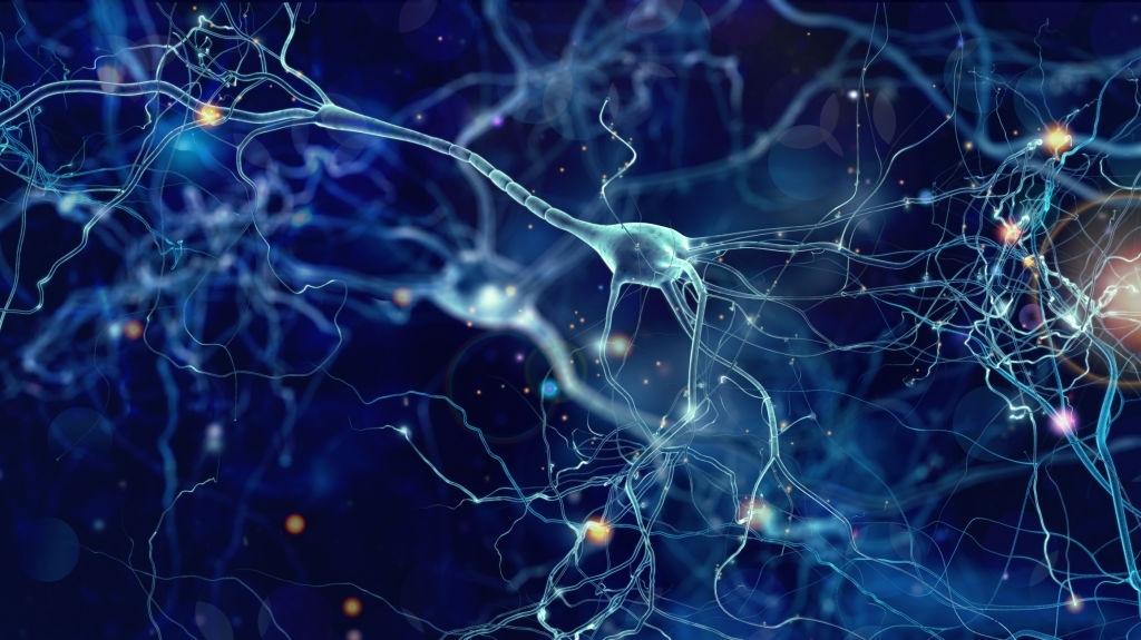 Neuron display in brain