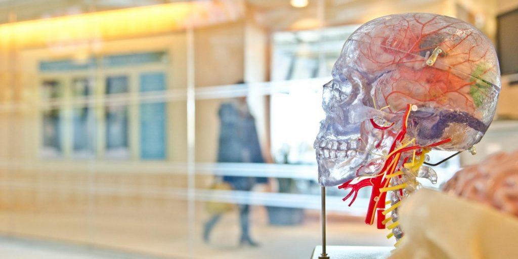 Image of human brain model in laboratory